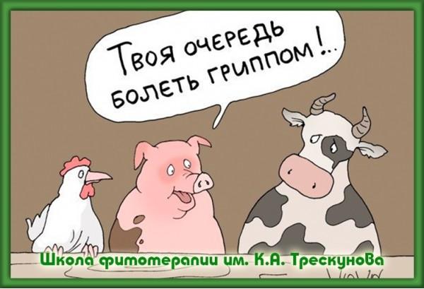 Лечение травами простуды в Москве