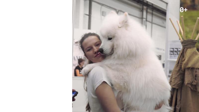 Выставка собак DOG Fest