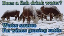 Water for winter grazing cows?