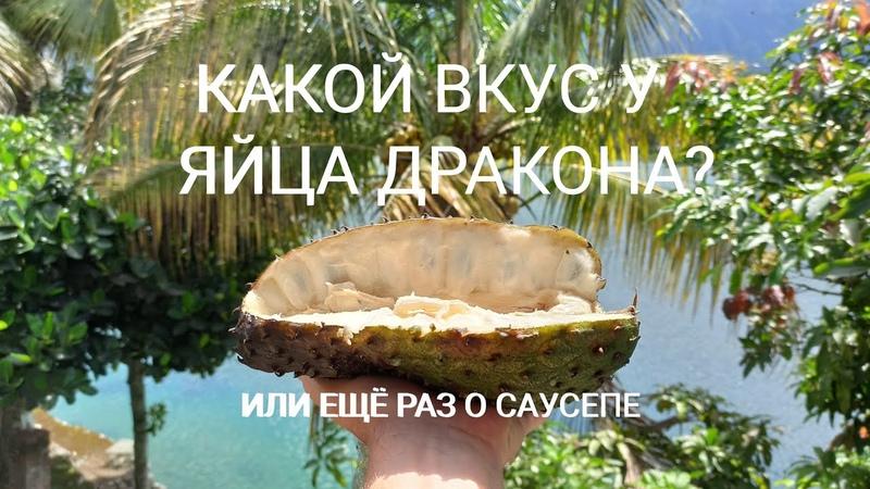 Яйцо Дракона на вкус или ещё раз о Саусепе Тук Тук Озеро Тоба Северная Суматра Индонезия 2020