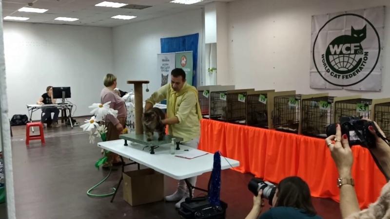 Фан шоу кошек девочек 8 место 8 лет Mega Miliy Drug Марси 4 11 2019 Тверь