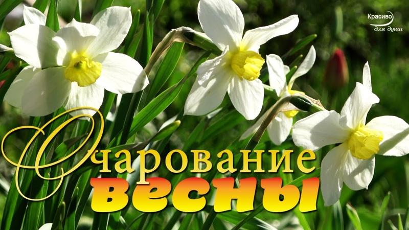 ОЧАРОВАНИЕ ВЕСНЫ Красивое цветение природы Весенняя свежесть и Прекрасная музыка души