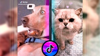 Furry little world - funny and cute animals on tiktok 10