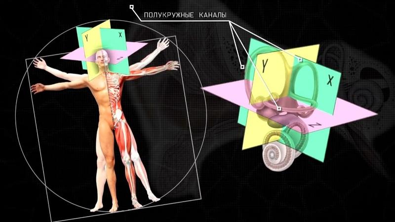 Тайны анатомии Органы чувств Фильм 2
