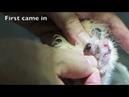 4 больных хомяка в стационаре / 4 in-patient hamsters with illness