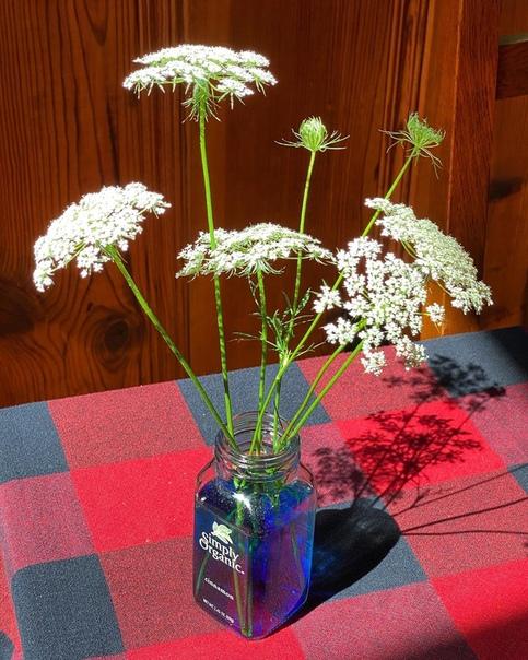 ЗАНИМАТЕЛЬНЫЕ ОПЫТЫ ДЛЯ ДЕТЕЙ. Как покрасить живые цветы Благодаря этому эксперименту ребенок сможет наблюдать движение воды в растениях.Вам понадобятся:- любые цветы с белыми лепестками,-