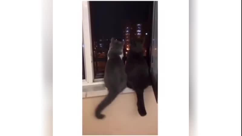 Эта кошачья парочка решившая вместо того чтобы предаваться карантинному унынию посидеть вместе и посмотреть на звезды ✨