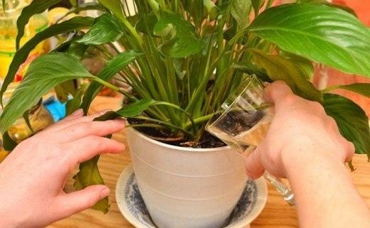 Чудо средство для растений
