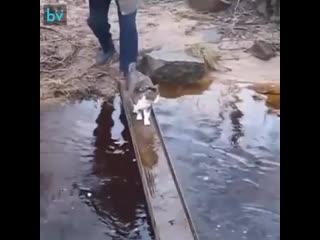 Когда не хочешь намочить лапки