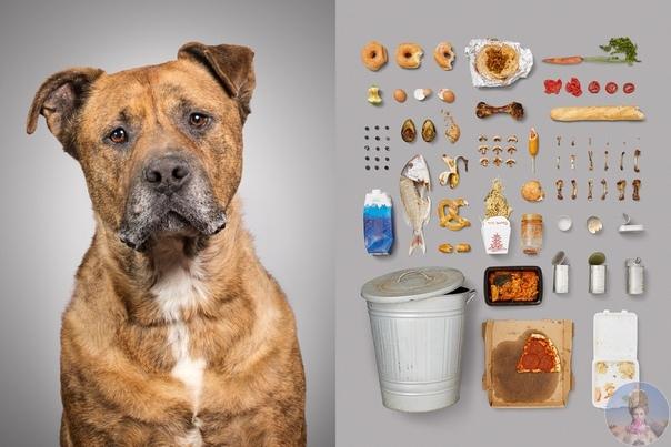 Собачья жизнь через предметы.