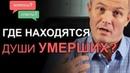Где находятся души умерших Отвечаю на ваши сложные вопросы Александр Шевченко