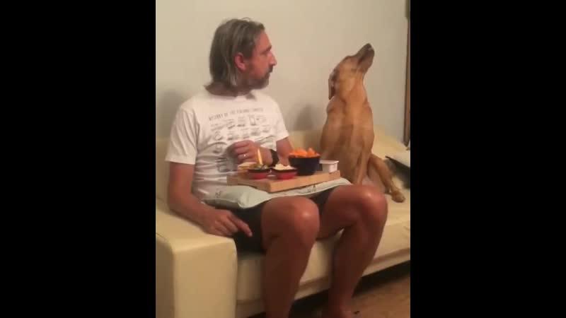 Скромняга пёс