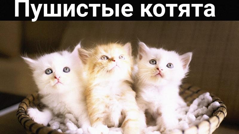 Приколы с котами смешные животные котики приколы кошки коты котики подборка смешных котов
