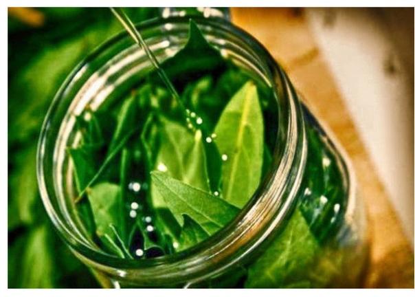 Тоник из лавровых листьев