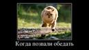 Веселые картинки. Демотиваторы про кошек самые смешные.
