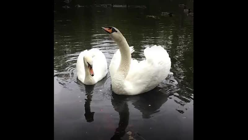 Лебедь вдовец решил жить ради сына 480p mp4