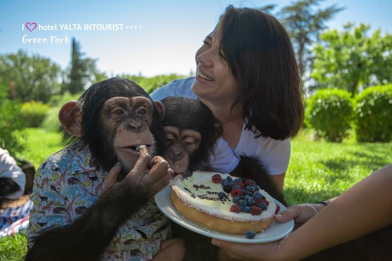 В зоопарке отеля Yalta Intourist отпраздновали день рождения шимпанзенка Оскара!