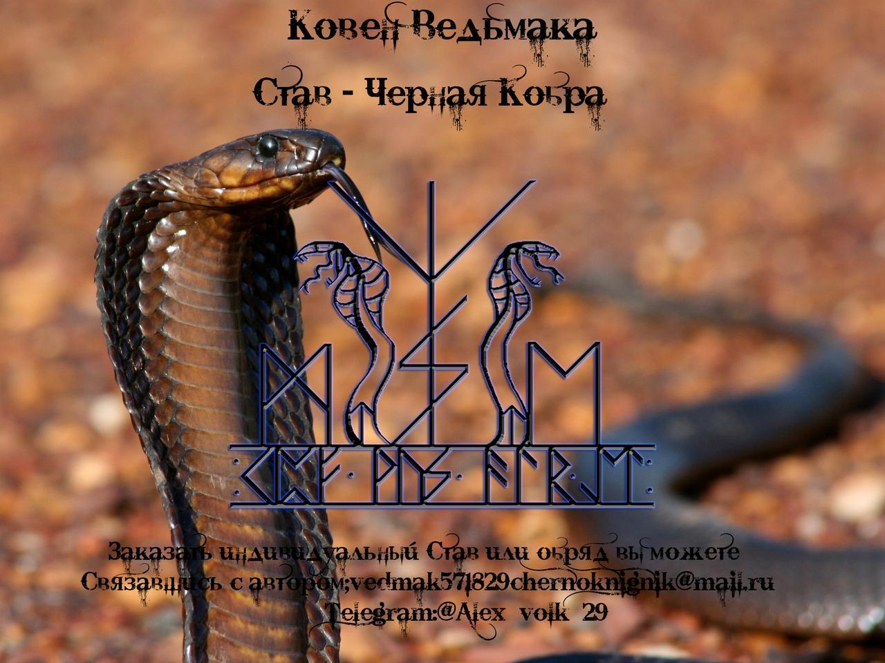 """Став - """" Черная Кобра """"© Ведьмак Чернокнижник 75G_PT1KmkU"""