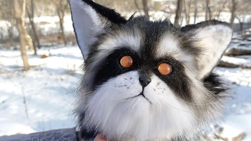 Кошка енот из далекого космоса