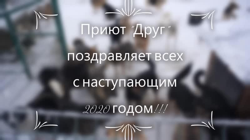 Господа волонтёры приюта Друг Сыктывкар поздравляют С Новым 2020 годом дорогие товарищи