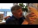 Видео от Британские котята для детей.Plush Blue Ray.