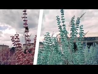 Пчела летает и цвет меняется (after effects project)