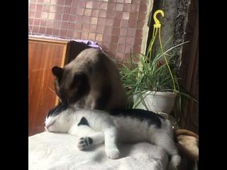 Видео от Анастасии Машининой