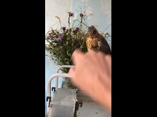 Видео от Ярославы Кузнецовой