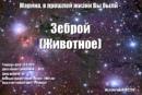 Федункив Марина   Москва   11