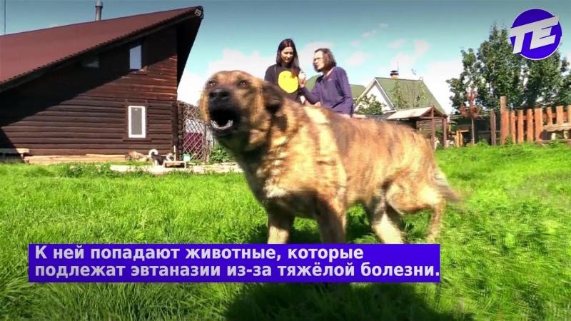 Жительница Екатеринбурга Светлана Седухина организовала хоспис для собак
