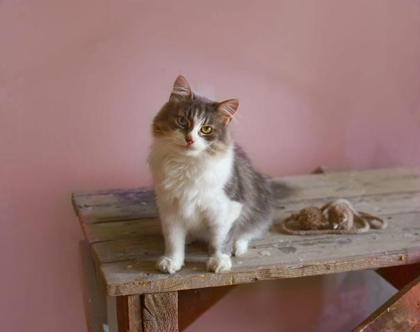 Очаровательная кошка Дульсинея в поиске очень добр...