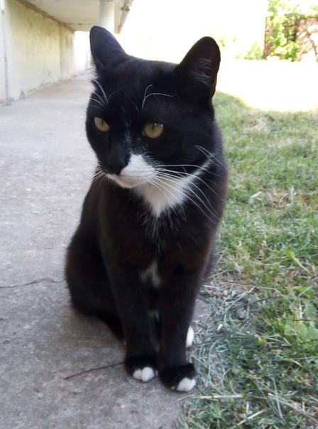 Кот Василий ищет семью или передержку. Живёт на улице 2 г...