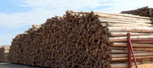Более 70 рабочих мест собираются организовать на новом производстве компании «Регион-лес» в Архангел