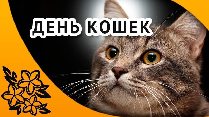 📅 1 марта - День кошек в России