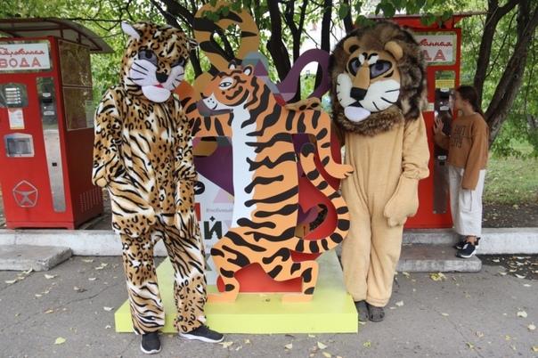 Хищный праздник: День тигра отметили в уссурийском...
