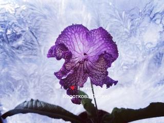 ''Красивые цветочки''