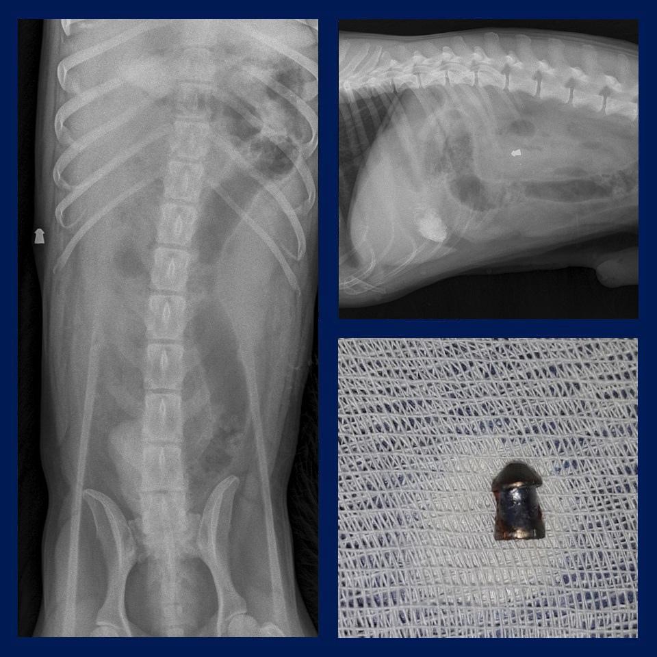 Пуля на рентгене и после извлечения