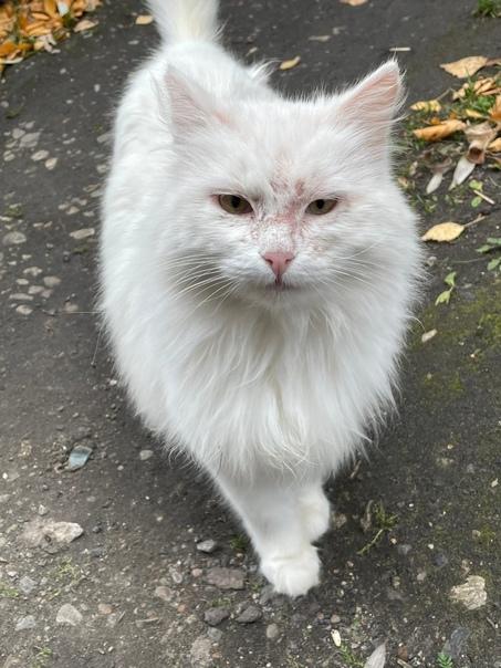 Пропал белый кот в районе ветклиники ДокторВет на ...