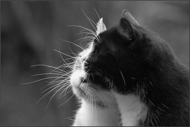 Мой кот-предатель Так мужчина и говорил своему коту Муслику. Ты же предатель, какой то. Я за тобой в соседний город ездил. На Крайний Север почти, практически. У злобных драконов тебя отнял.