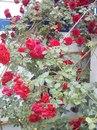 Личный фотоальбом Надежды Фалилеевой