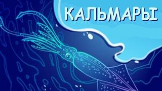 Кальмары: монстры из глубин | Познавательное видео про кальмаров | Удивительный мир беспозвоночных