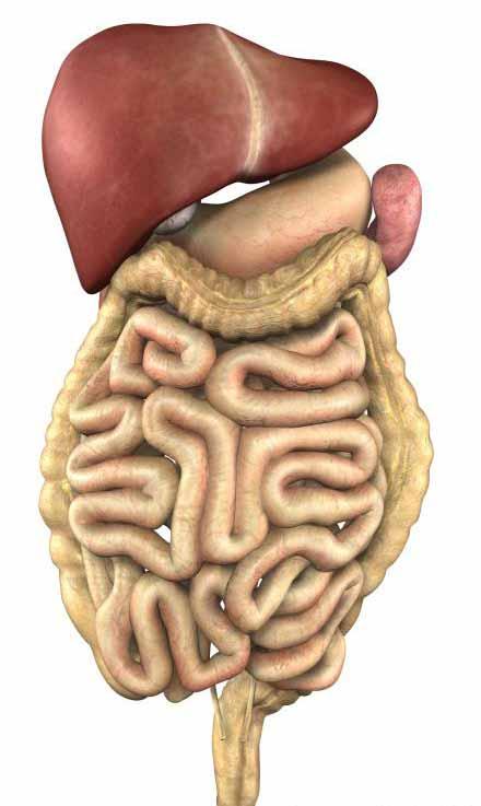 Каковы причины рака желудка?