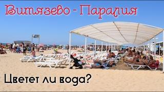 Витязево. Паралия. Отличный пляж! Но цветет ли вода в августе? 2020