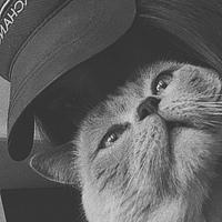 Фотография страницы Анастасии Шумельной ВКонтакте
