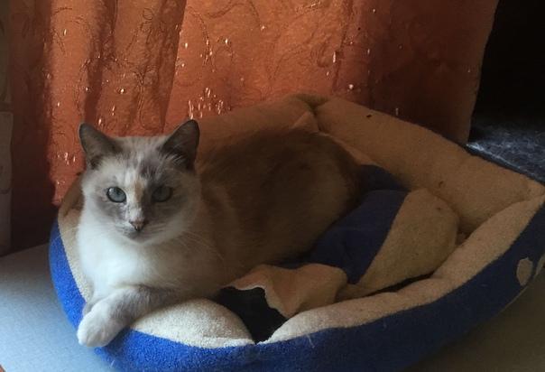 #нужна_финансовая_помощь@vmestepnz_animals #Ляля_и_котята_ID