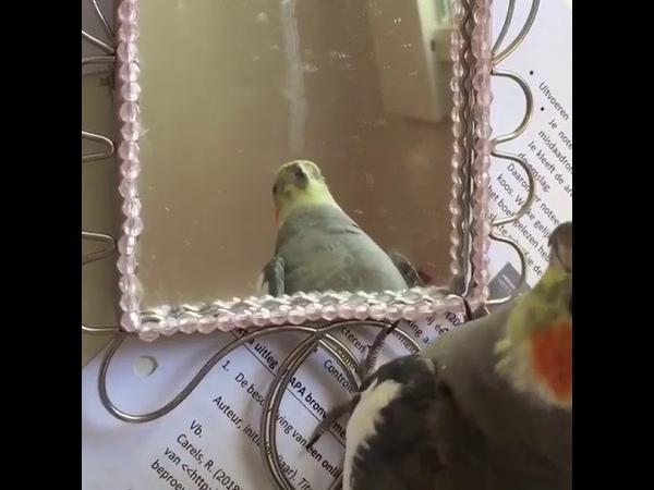 Peekaboo Meet Bailey @birdyandbailey today's WeeklyFluff 
