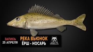 Русская Рыбалка 4 — Ёрш-носарь на реке Вьюнок