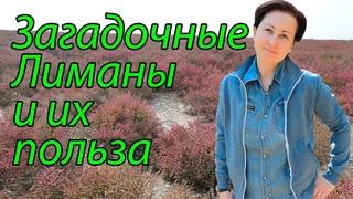 Места силы Краснодарского края. Лиманы Черного моря.  Растения Солерос. Эзотерика.