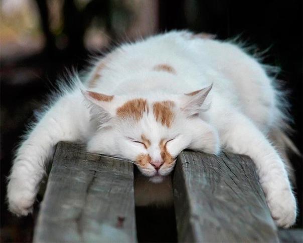 Как спят кошки Вы когда-нибудь задумывались о том, как спят кошки Где-то на Канарских островах, на большой вилле развалился кот. Толстый и ленивый, он знает, что в этой жизни ему выпал джекпот.