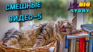 🙂 Смешные видео - часть 5. Самая смешная подборка ситуаций